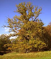 Herbst im Reinhardswald